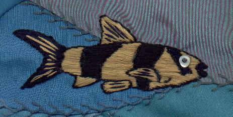 harlequin-fish